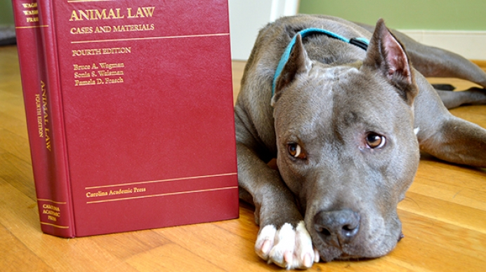 animal and law